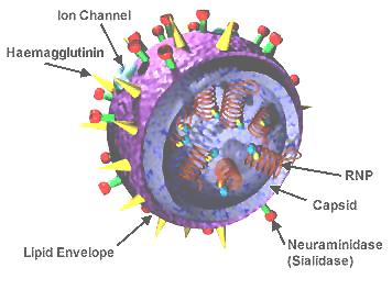 Uomo e microrganismi